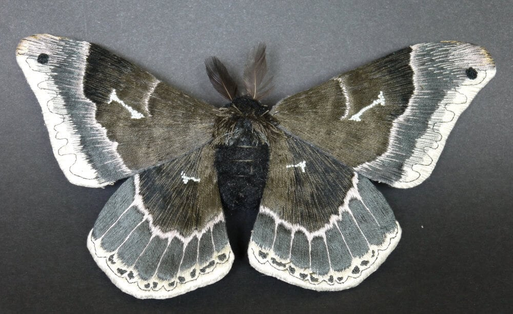 moth yumi okita fy 6
