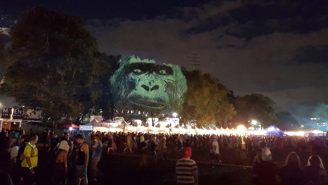 Gorilla NY maizz 1