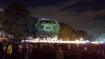 Gorilla NY maizz