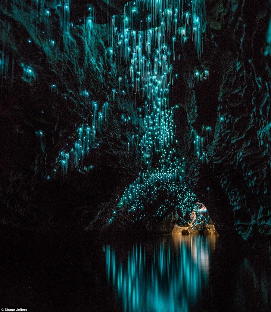 waitomo caves 03