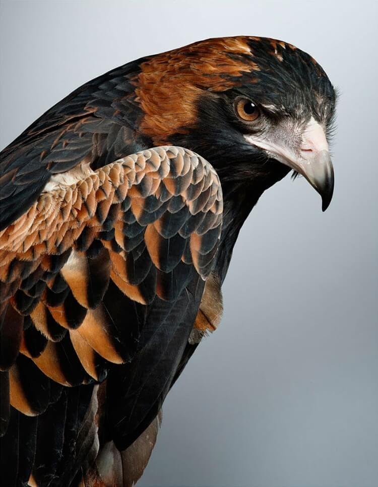 leila jeffreys bird portraits fy 10