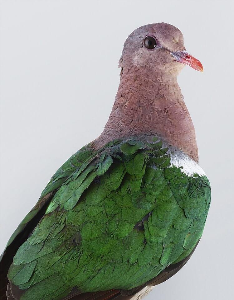leila jeffreys bird portraits fy 2