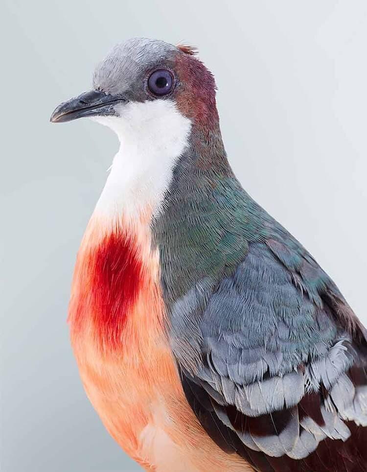 leila jeffreys bird portraits fy 3