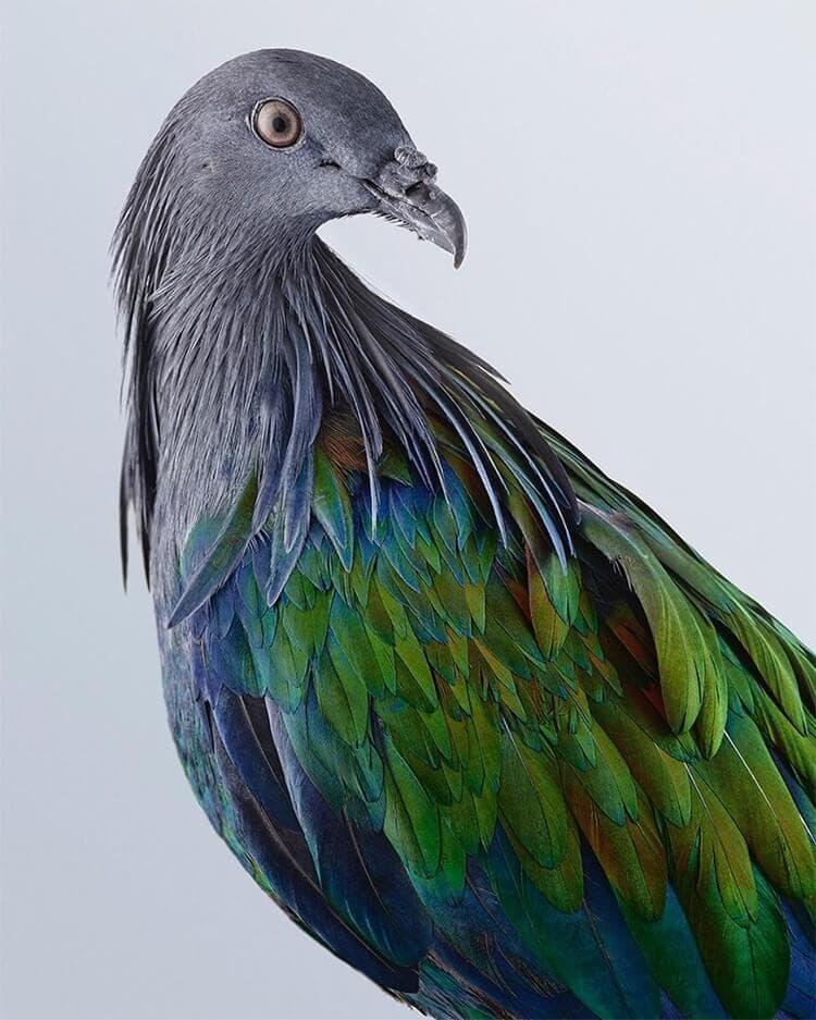 leila jeffreys bird portraits fy 4