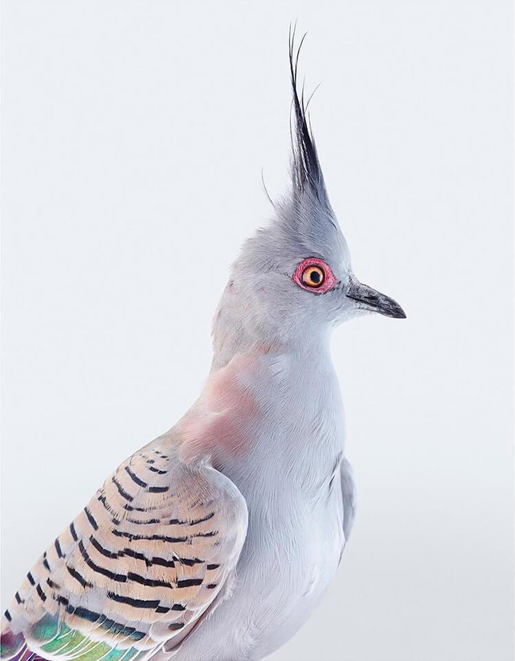 leila jeffreys bird portraits fy 5