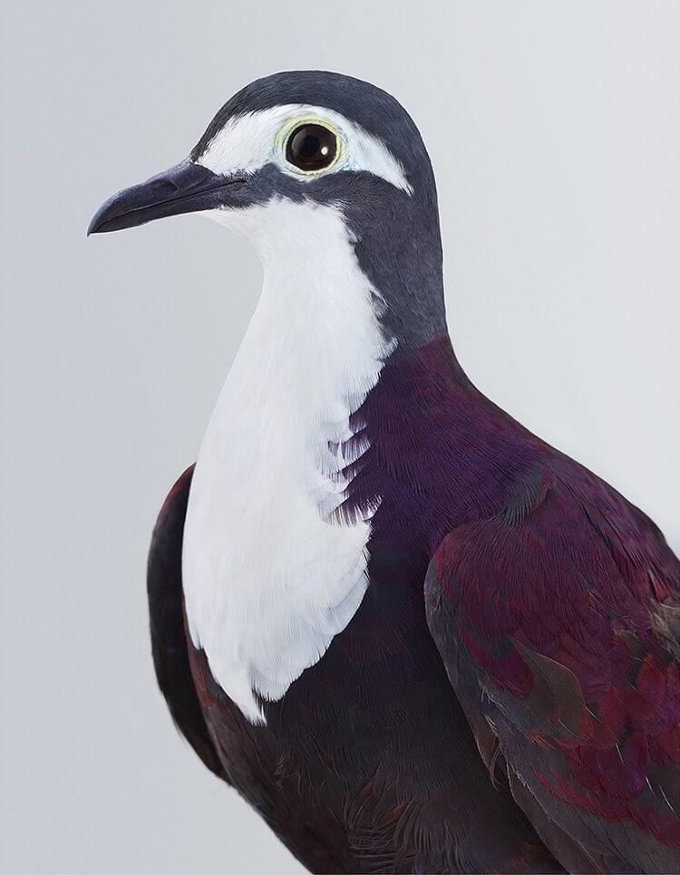 leila jeffreys bird portraits fy 6