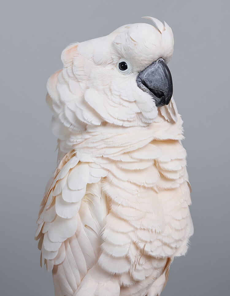 leila jeffreys bird portraits fy 7