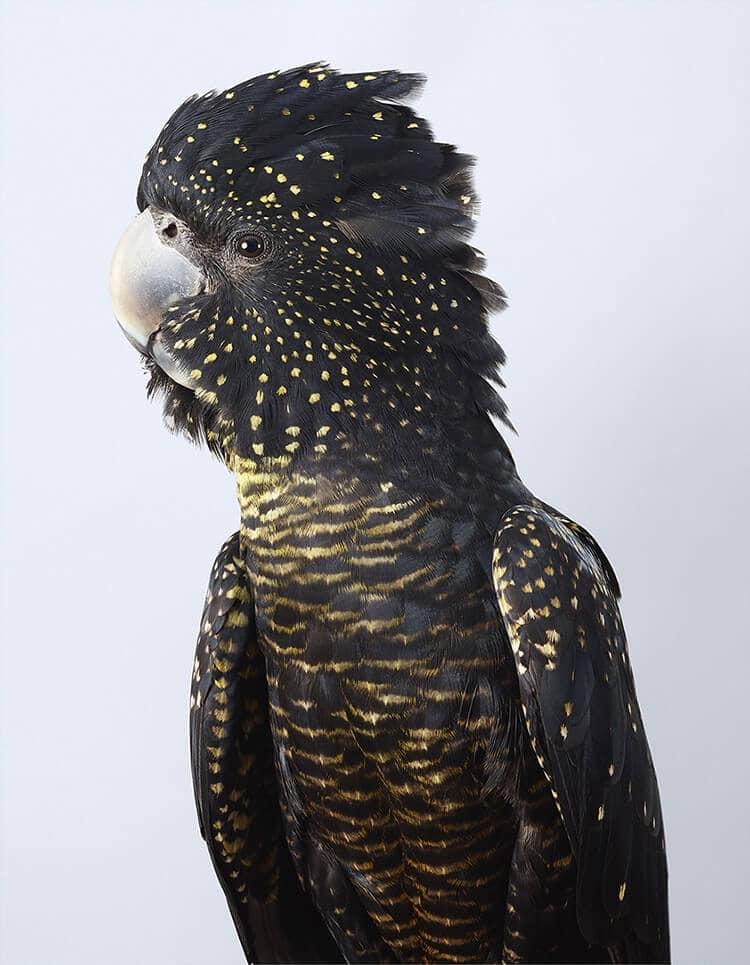 leila jeffreys bird portraits fy 8