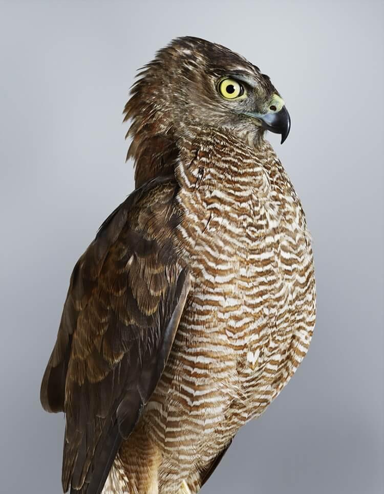 leila jeffreys bird portraits fy 9