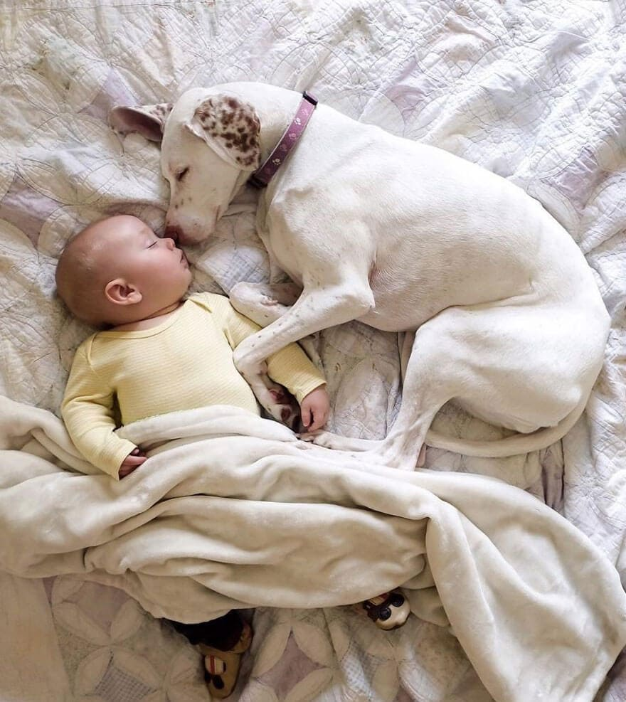 rescue dog love child nora elizabeth spence freeyork 10