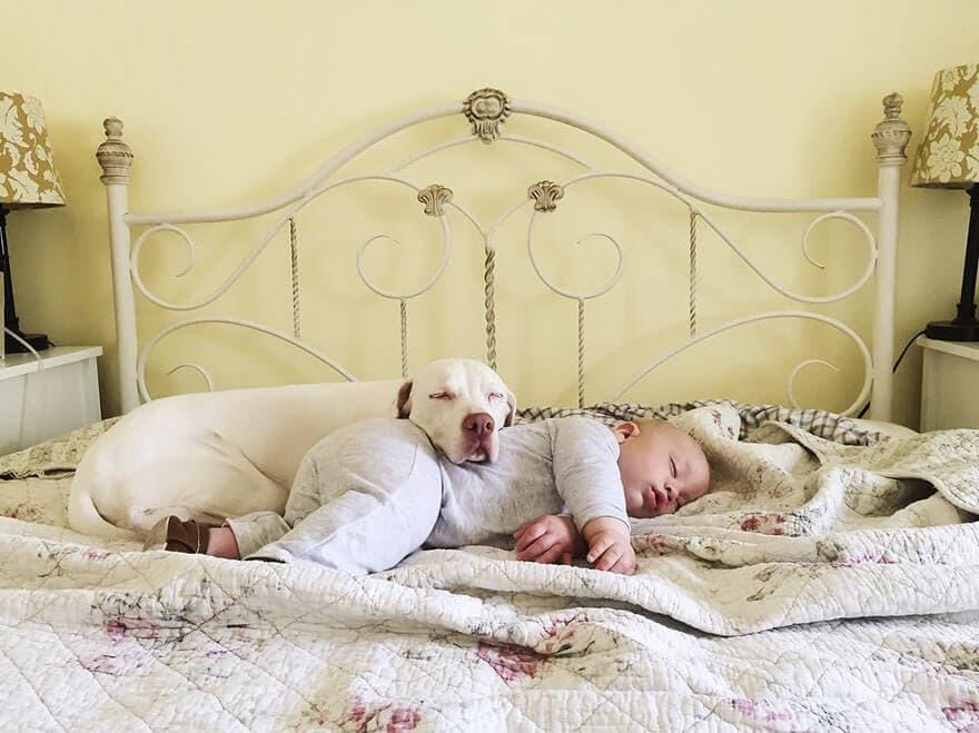rescue dog love child nora elizabeth spence freeyork 12