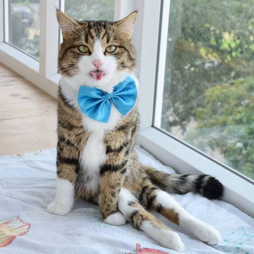handicapped cat rexie fy 3