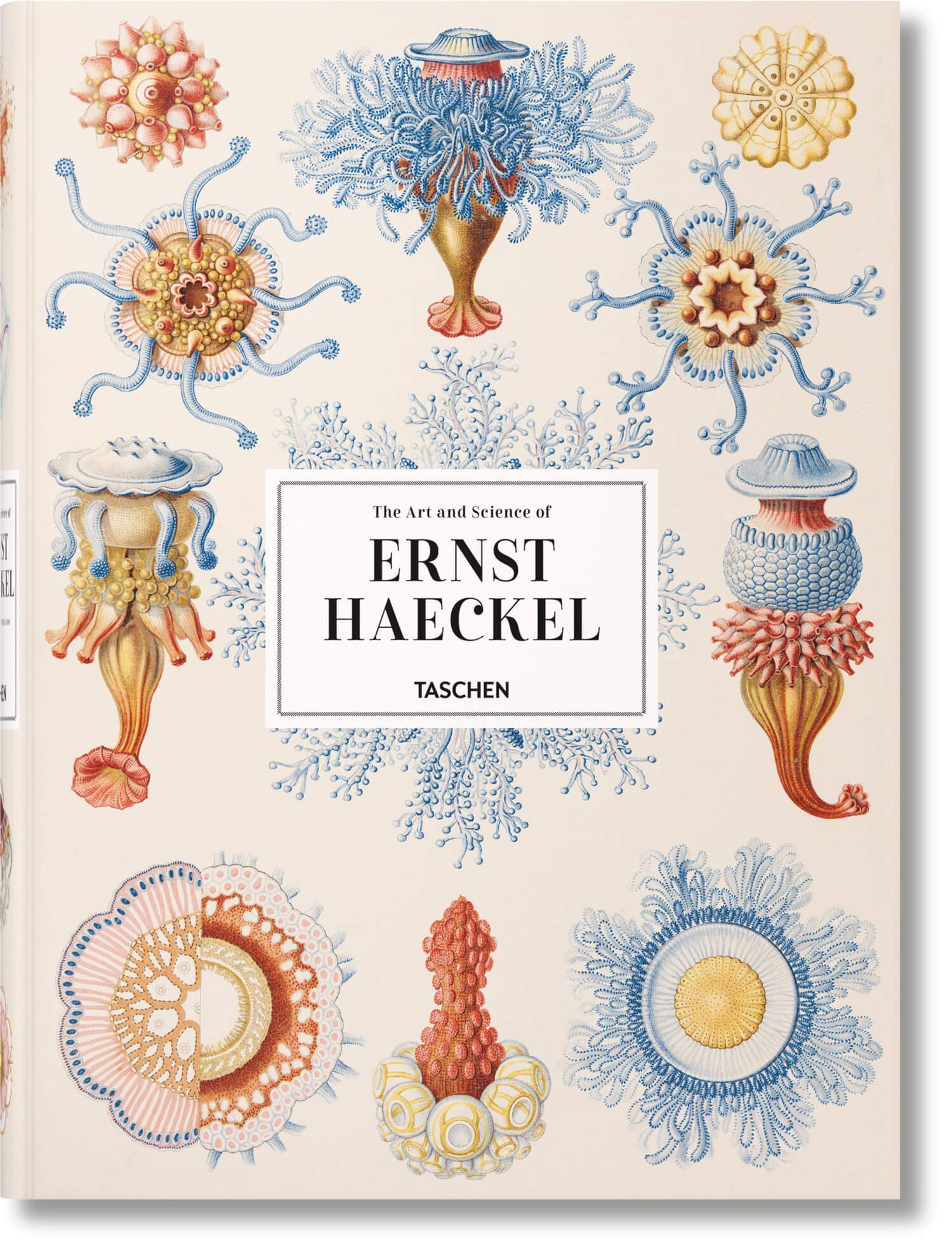 the art and science of ernst haeckel fy 11