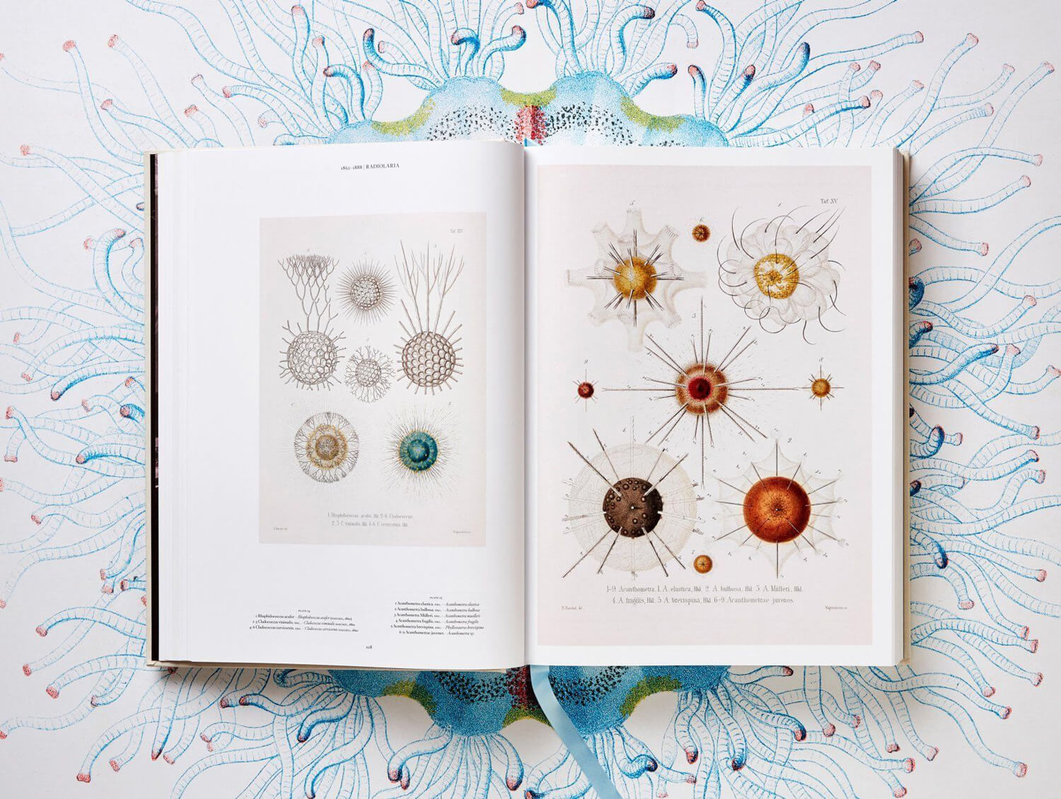 the art and science of ernst haeckel fy 3