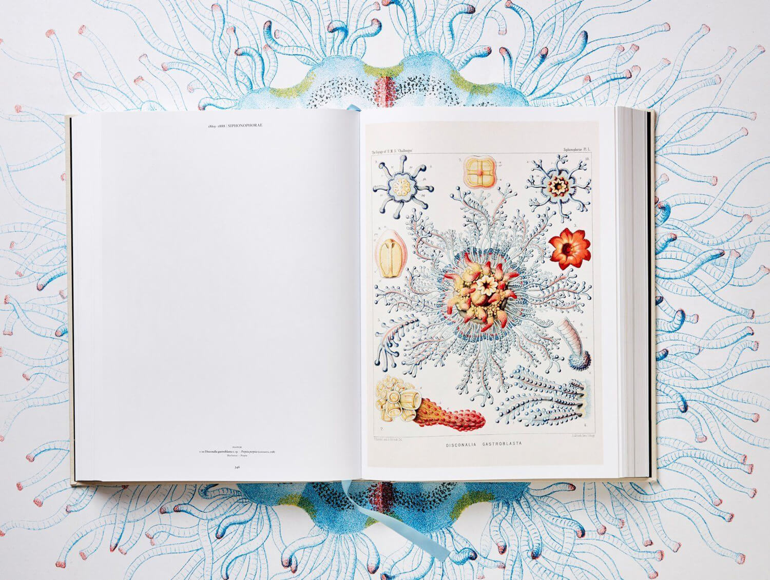 the art and science of ernst haeckel fy 5