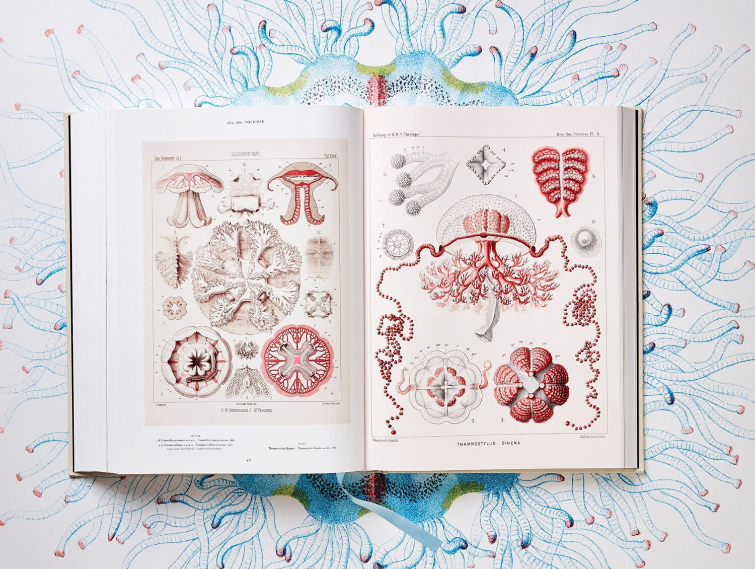 the art and science of ernst haeckel fy 7