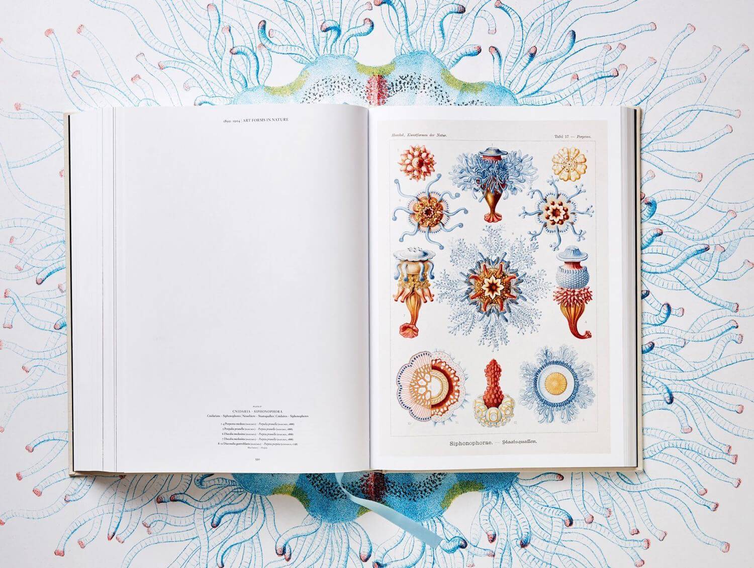 the art and science of ernst haeckel fy 8