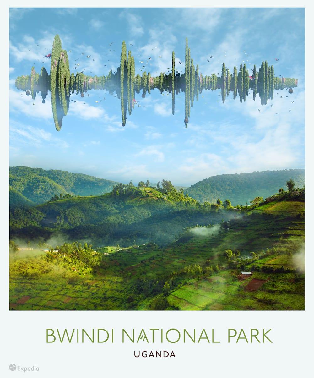 8 Bwindi National Park Uganda