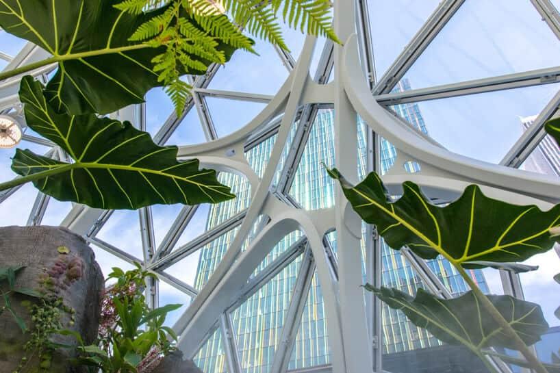 amazon biospheres 2