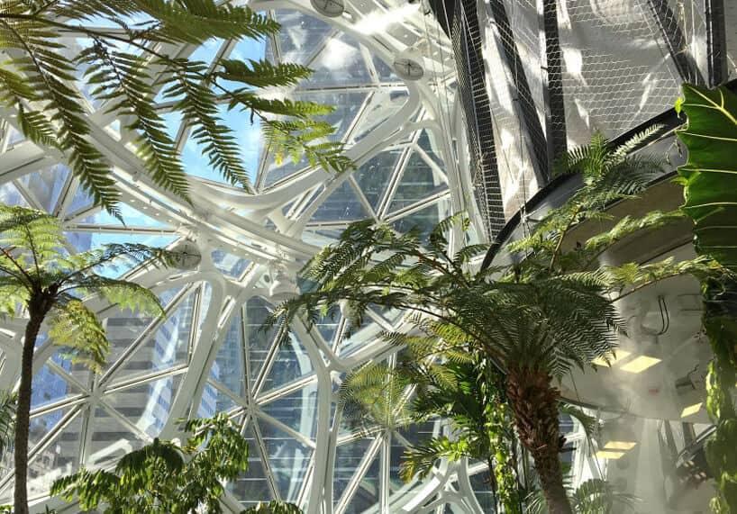 amazon biospheres 3