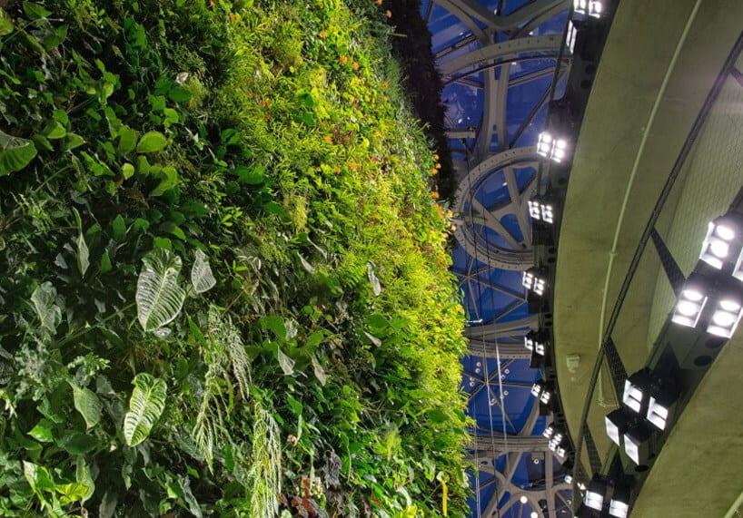 amazon biospheres 4