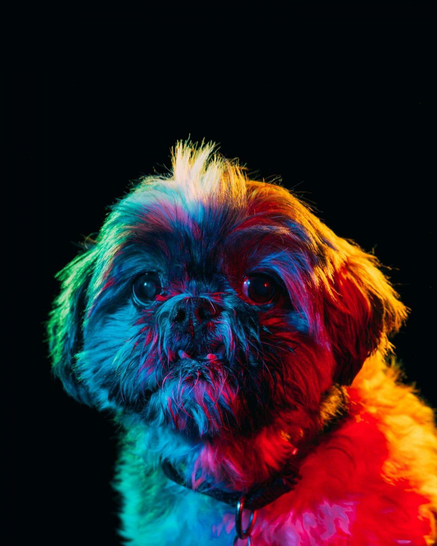 dogs paul octavious 4