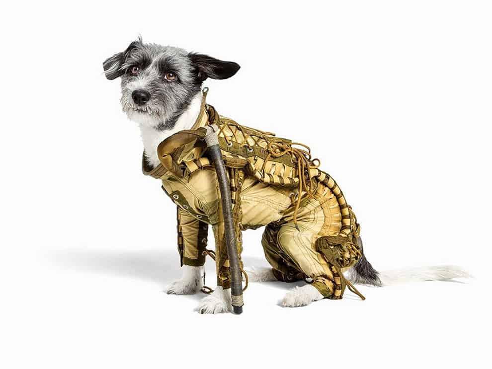 soviet dog spacesuit dog 5