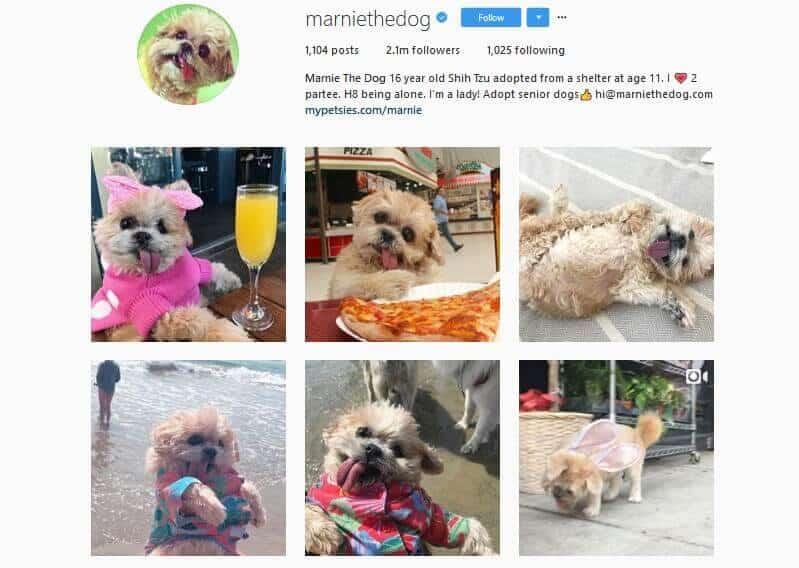 Marniethedog