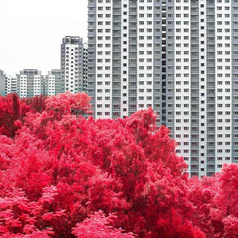 floral phantasmagoria finbarr fallon singapore 2