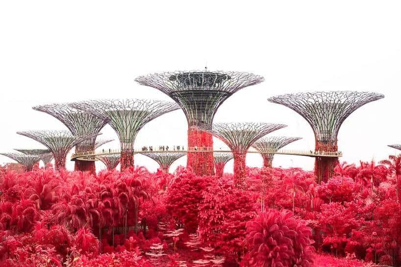 floral phantasmagoria finbarr fallon singapore 3