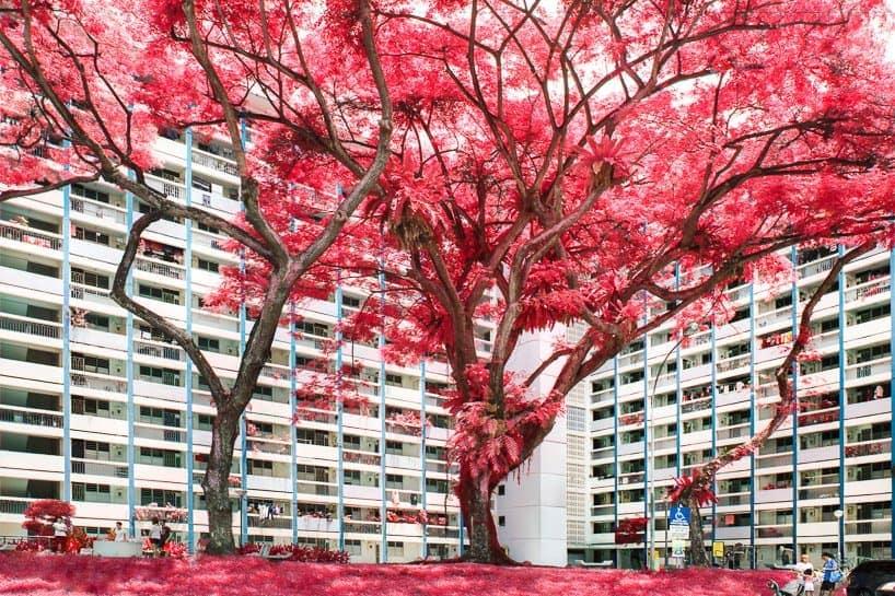 floral phantasmagoria finbarr fallon singapore 8