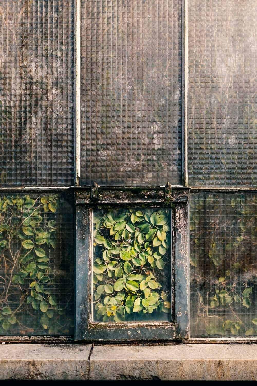 samuel zellers greenhouses 6
