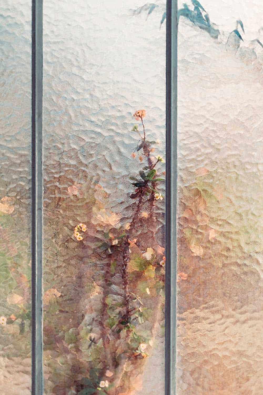 samuel zellers greenhouses 7