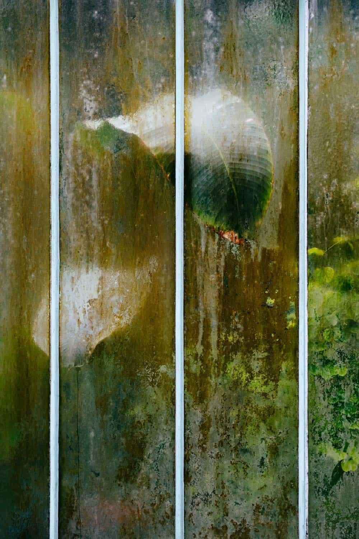 samuel zellers greenhouses 8