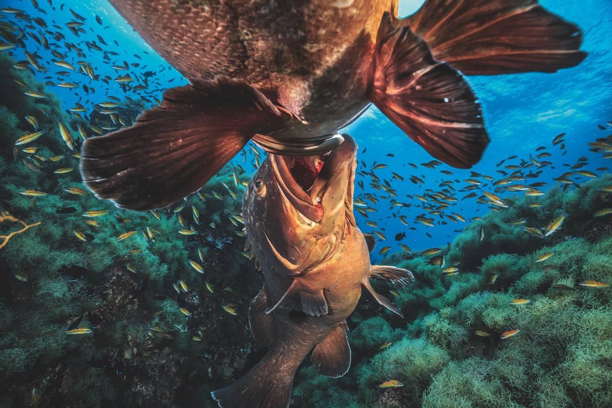 underwater photography book 3