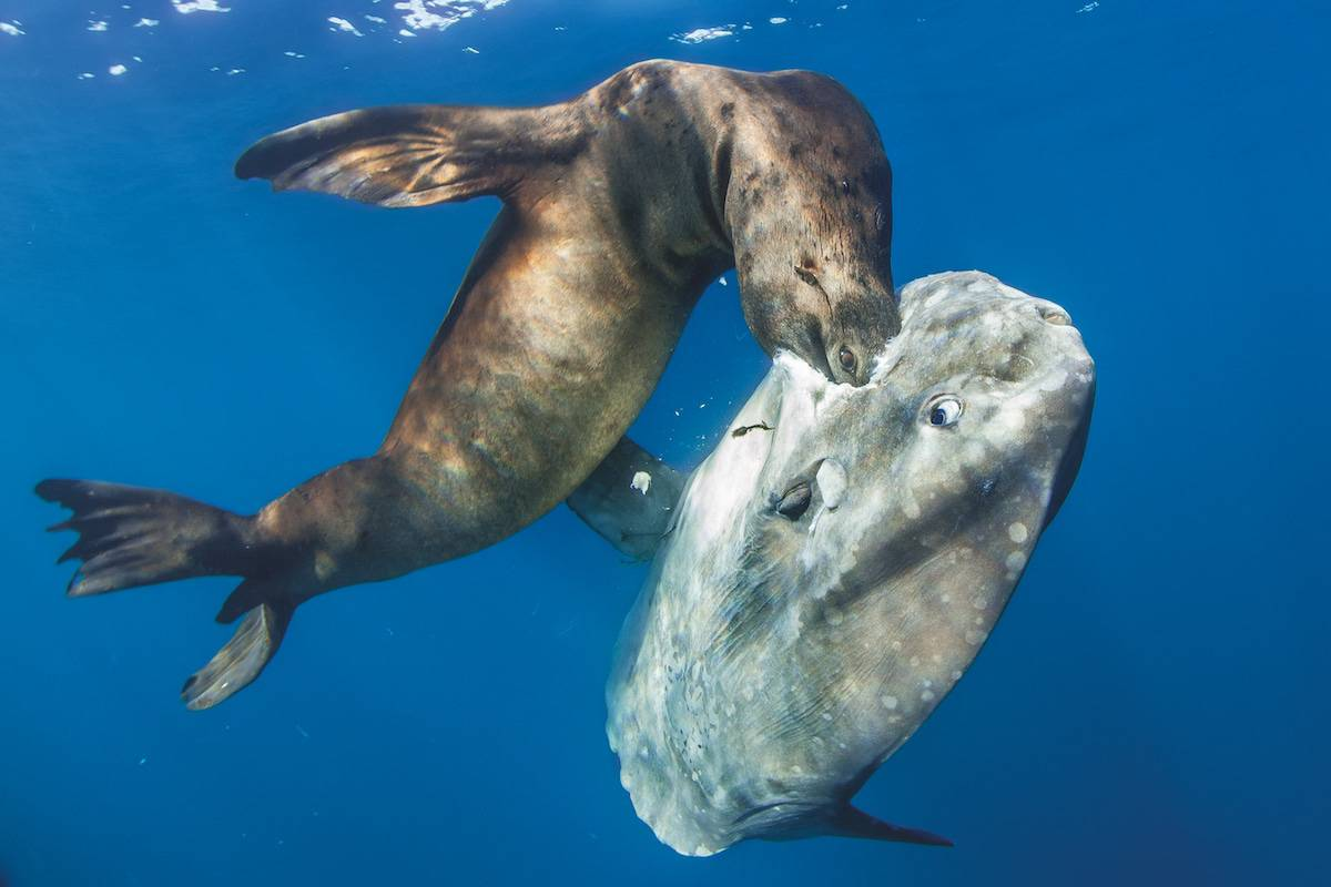 underwater photography book 4