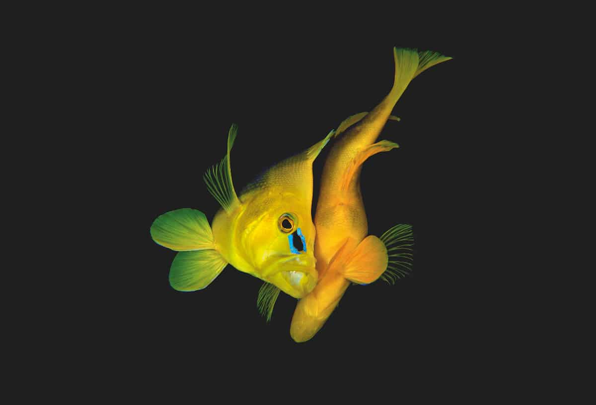 underwater photography book 8