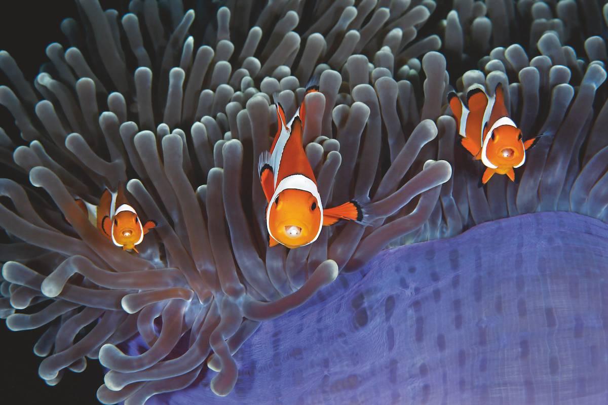 underwater photography book 9