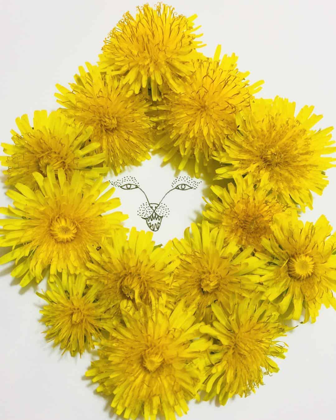 melissa flesher flower drawing 11