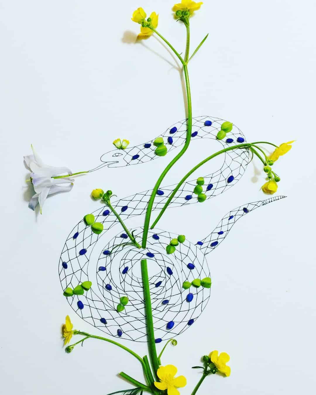 melissa flesher flower drawing 5
