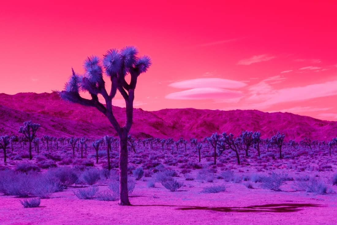 infrared photography kate ballis 1
