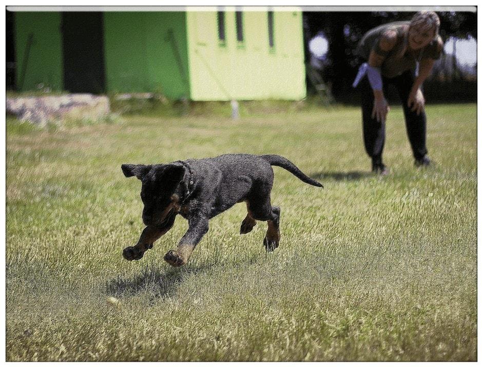 Max Polyakov`s dogs trainings