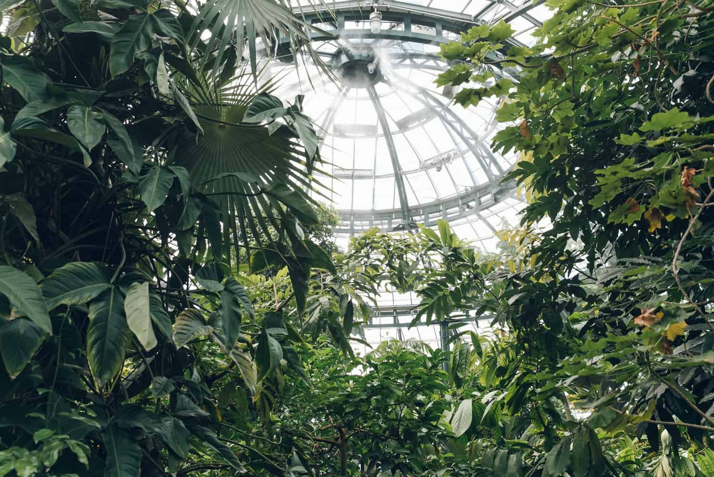 haarkon glasshouse greenhouse 10