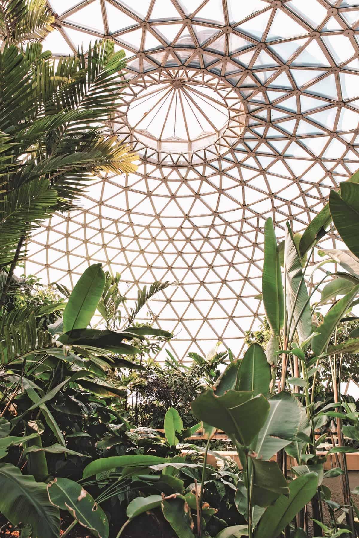 haarkon glasshouse greenhouse 5