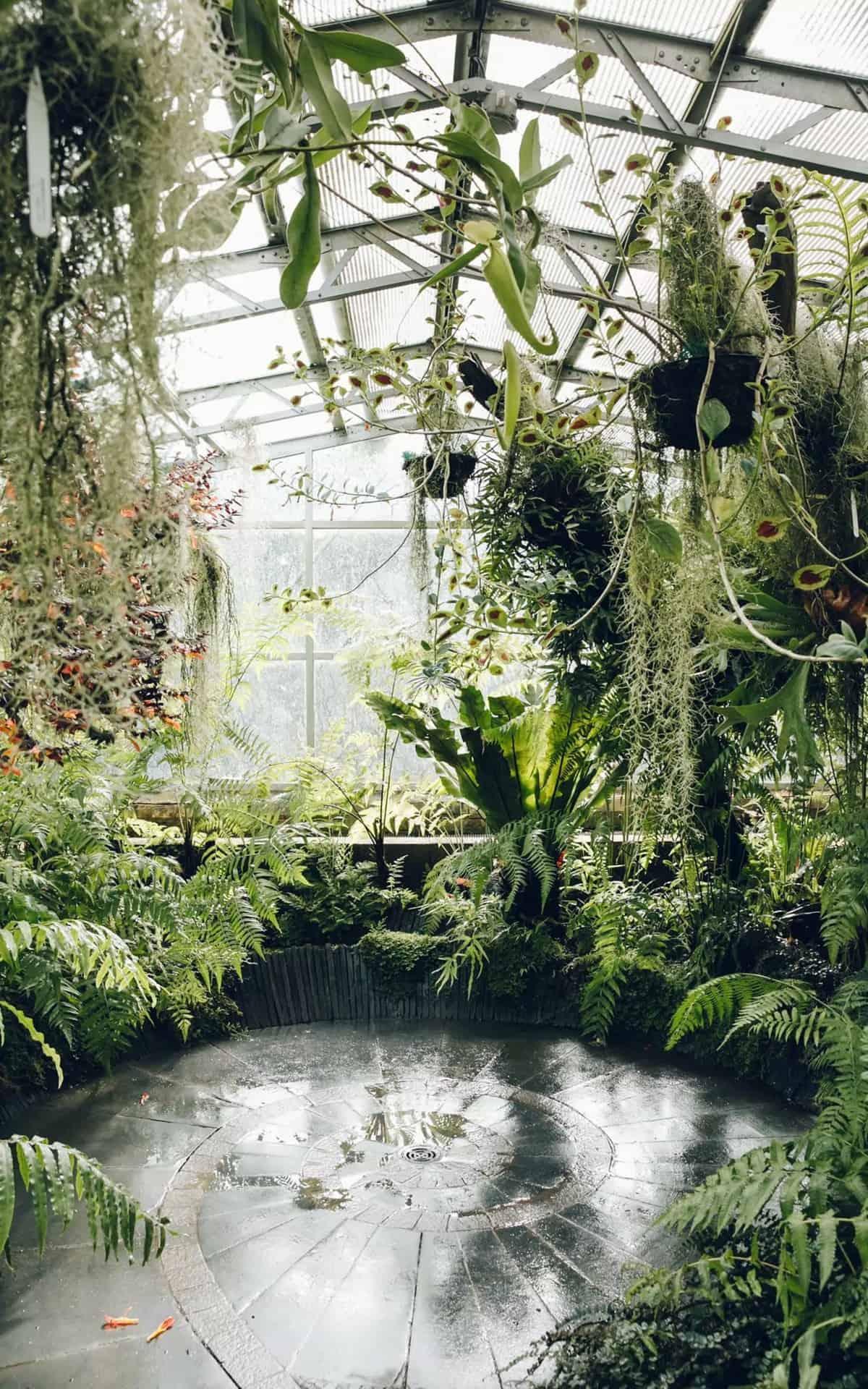 haarkon glasshouse greenhouse 7