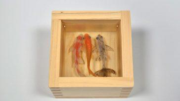 goldfish by riusuke fukahori 1