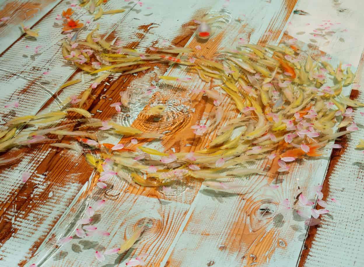 goldfish by riusuke fukahori 8