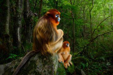Marsel van Oosten Wildlife Photographer of the Year 1