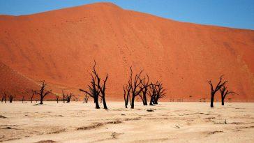 Namib Desert 1
