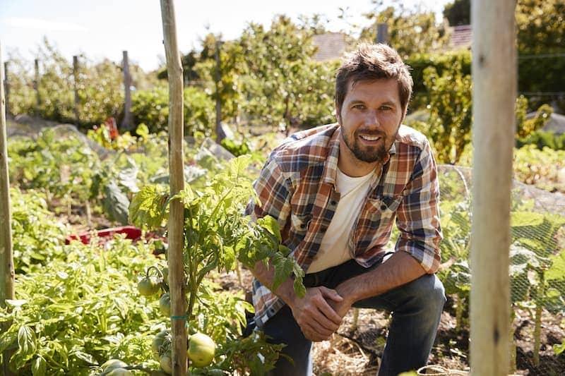 portrait of man checking tomato plants growing on PL6MEYT